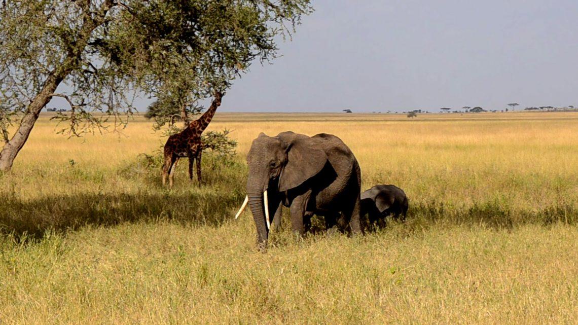 Comment obtenir un visa pour la Tanzanie?