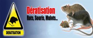 traitement anti rat